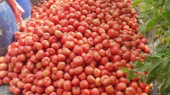 春季大棚蔬菜如何种植?合理施肥很重要!