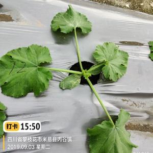 腐植酸可溶性肥料的作用