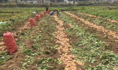 腐植酸肥料适合什么情况下使用?