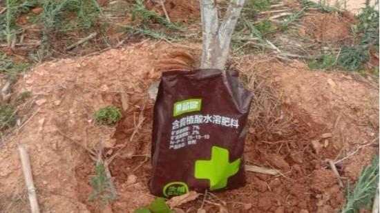芒果怎样施肥产量高?芒果施肥注意事项,文末有农户分享哦!