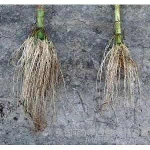 腐植酸水溶肥有生根效果么?