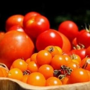 各时期番茄施肥方案,建议收藏!