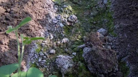 根病苗弱怎么施肥?土壤板结怎么解决?怎么施肥产量高?