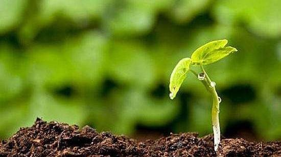【土壤修复全解】同样是种地为什么别人可以高产,而你不能?