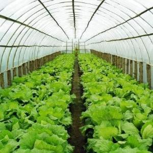 春三月大棚蔬菜,盯好这几点,不愁管不好!