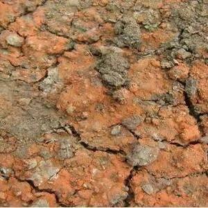 土壤酸化的危害以及解决办法!